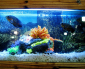 SEO Marketing Solutions for tropical fish pet store example